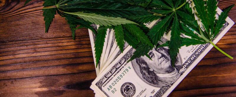 بیزینس اول دوک ویلسون بر پایه پرورش و فروش ماریجوانا بود